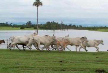 ICA reiterara procedimientos para movilizar ganado