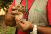31 animales de diferentes especies recobraron la libertad en su medio natural