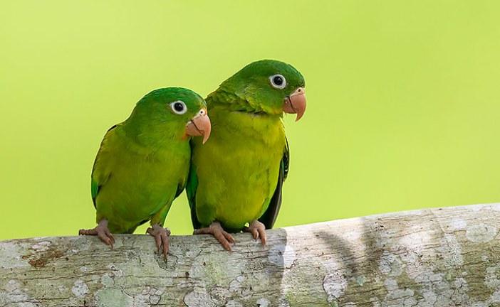 En agosto: Encuentro Nacional de Aves en Yopal