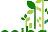 Luz verde a la polémica EICE Ceiba de Yopal