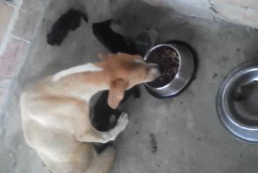 Mañana jornada de solidaridad con animales del coso municipal de Yopal
