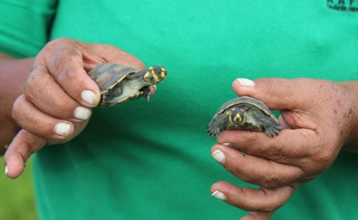 Corporinoquia y Cornare devolvieron fauna silvestre a su hábitat en San Luis de Palenque