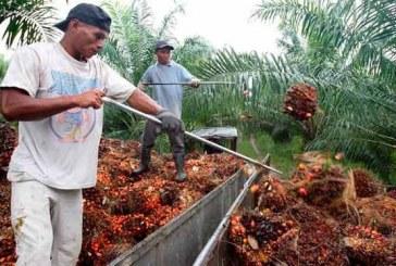 Con cifras récord, agroindustria de palma de aceite contribuye a incremento exportador en 2017