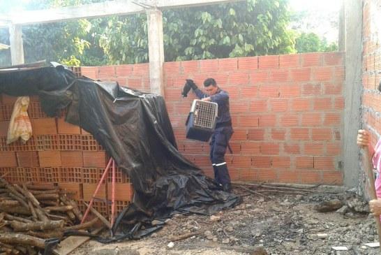 Bomberos rescataron oso hormiguero que se encontraba en zona residencial de Yopal