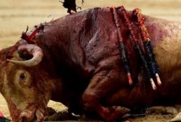 Coger el Toro por los cuernos