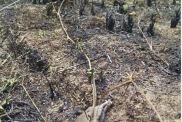 Arde la vereda guaduales en Aguazul Casanare