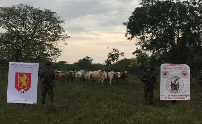 Abigeos no lograron hurtar bovinos y equinos avaluados en 250 millones