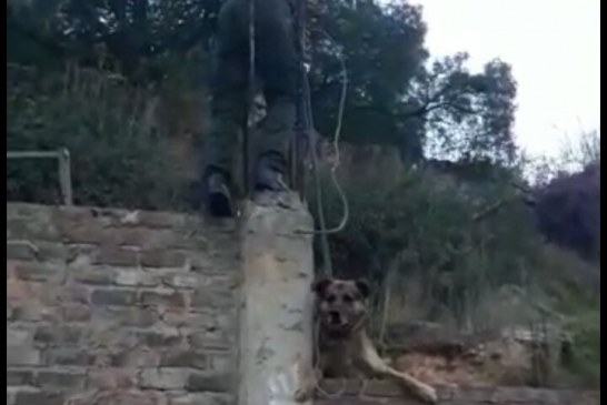 Policía rescata canino en Sogamoso