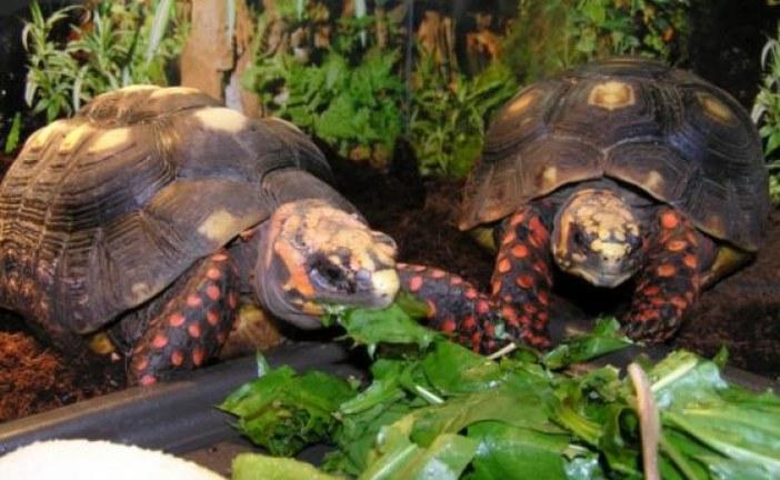 El municipio de San Luis de Palenque será el nuevo lugar de hábitat de más de 400 animales
