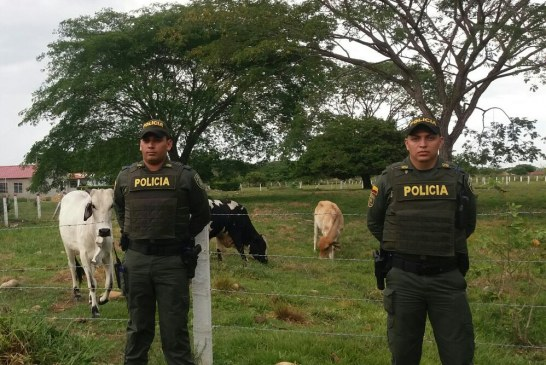 Policía recuperó semovientes en Hato Corozal