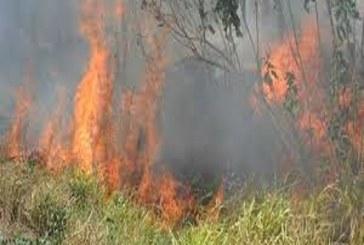 Incendio forestal de gran magnitud en Paz de Ariporo y alcaldía no tiene convenio con bomberos.