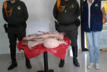 Incautada carne de Chigüiro, lapa y Armadillo en Puerto López, Meta