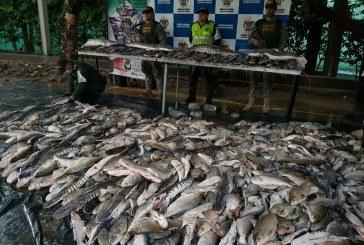 Autoridades en Arauca incautaron cuatro toneladas de pescado provenientes de Venezuela