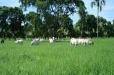 Los ganaderos de Arauca tienen previsto paralizar hoy el departamento
