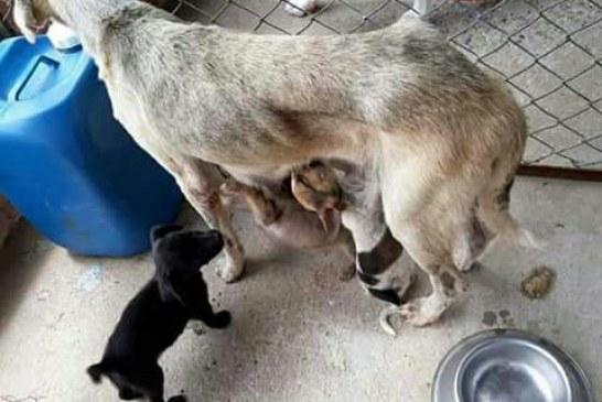 Animales en Coso Municipal mueren de hambre y enfermos