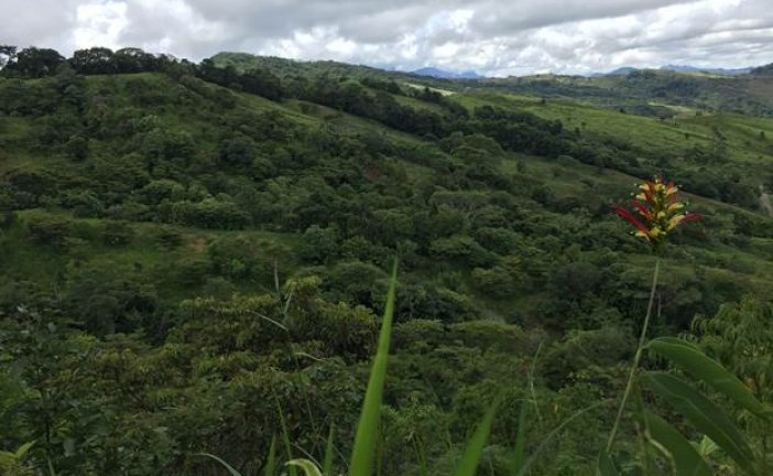 Equión reforestó 40 hectáreas de bosque en Rincón del Soldado