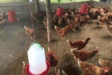 205 víctimas residentes en Paz de Ariporo fueron beneficiadas con proyectos productivos