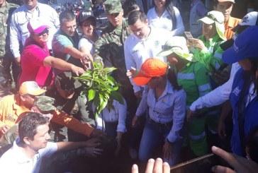 Más de 2 mil árboles sembró ayer Casanare en el Día Mundial del Árbol