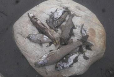 Mortandad de peces y disminución de aguas se registra en el río Casanare