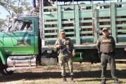 En Pore, Ejército Nacional y Policía recuperaron cuatro bovinos padrotes