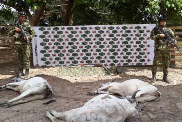 En San Luis de Palenque el Ejército Nacional evitó posible carneo de semovientes