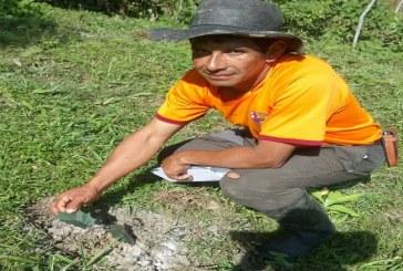 Inició la siembra de 60 hectáreas de lulo en chámeza.