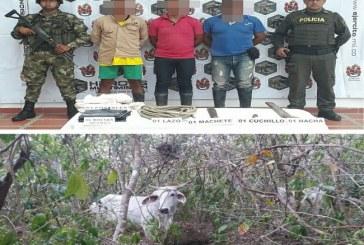Tres sujetos fueron capturados, cuando pretendían carnear dos vacas en Pore.