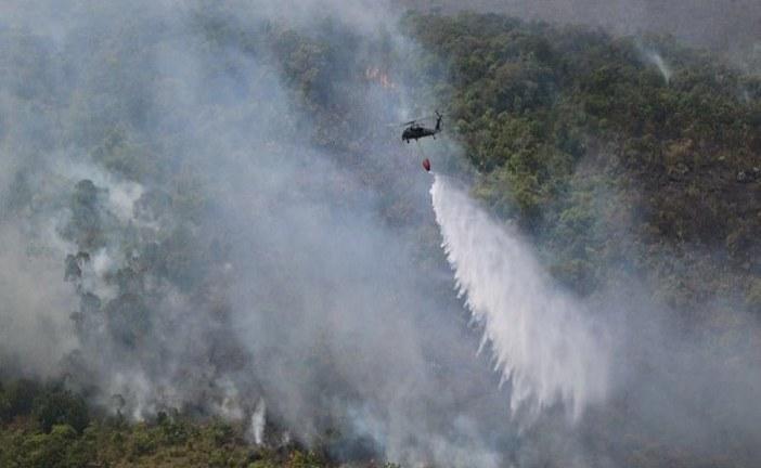 Liquidado incendio forestal en La Macarena.