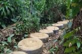 Dos capturas por introducir llantas, excavar y talar dentro del Humedal Aguas Claras.