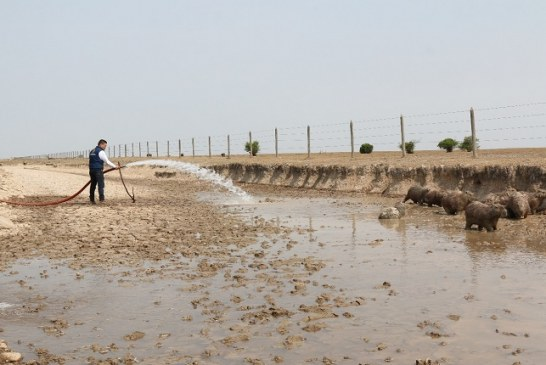 325 mil galones de agua han calmado la sed a chigüiros en Paz de Ariporo.