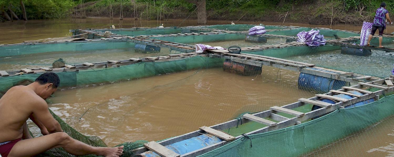 Se conforma consejo regional de piscicultura
