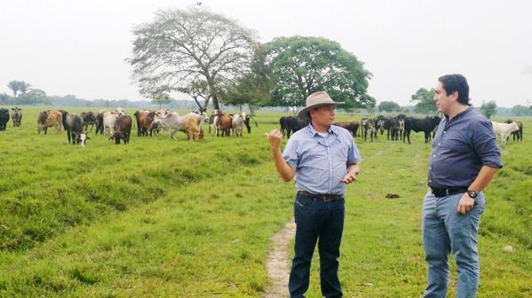 Sortearán vacas preñadas para 178 ganaderos de Casanare