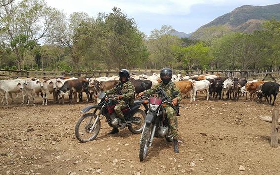 En Paz de Ariporo el Ejército frustró robo de ganado