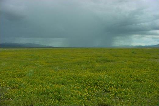 """Lluvias """"como caidas del cielo"""" para los ganaderos de Casanare"""