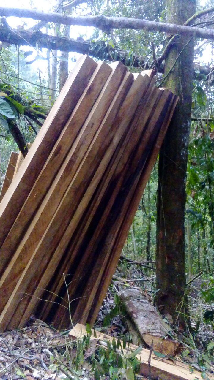 Comunidad pide detener Arboricidio de bosque nativo entre Recetor y Pajarito.