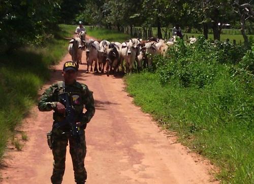 Ganaderos de Casanare y Arauca azotados por el robo de ganado.