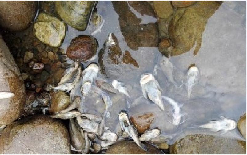 Obras de mitigación de riesgos en río Cusiana habría causado mortandad de peces