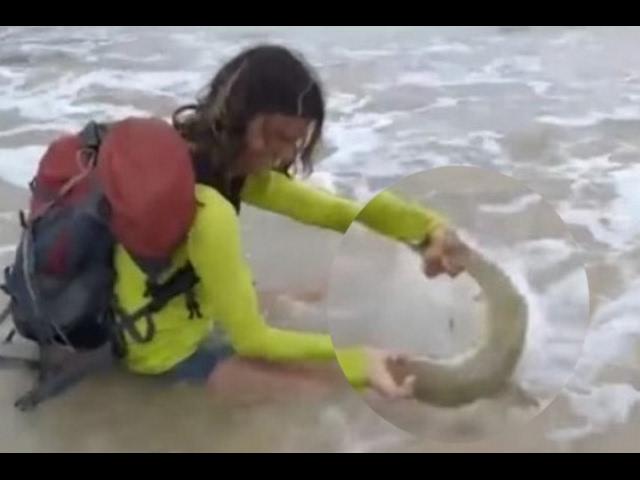 Turista sacó a tiburón para una foto y  lo mordió