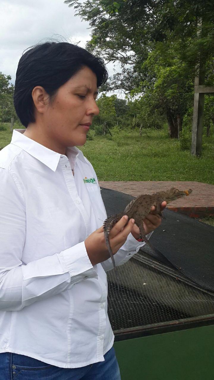 Por primera vez en Colombia se reporta el nacimiento de más de 1.900 animales de 2 especies en vía de extinción criados en cautiverio
