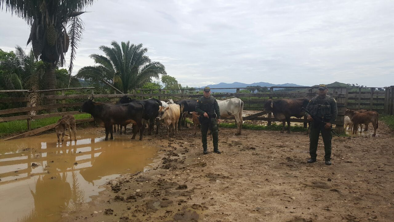 Policía recupera semovientes avaluados en 34 millones de pesos que habían sido hurtados en Támara