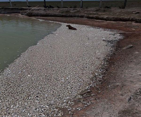 Mortandad de peces en zona petrolera en Paz de Ariporo.