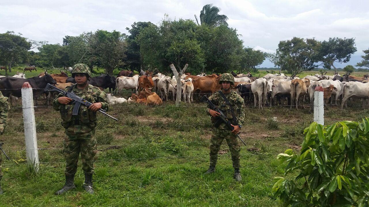 Ejército Nacional incauta 133 semovientes en Arauca