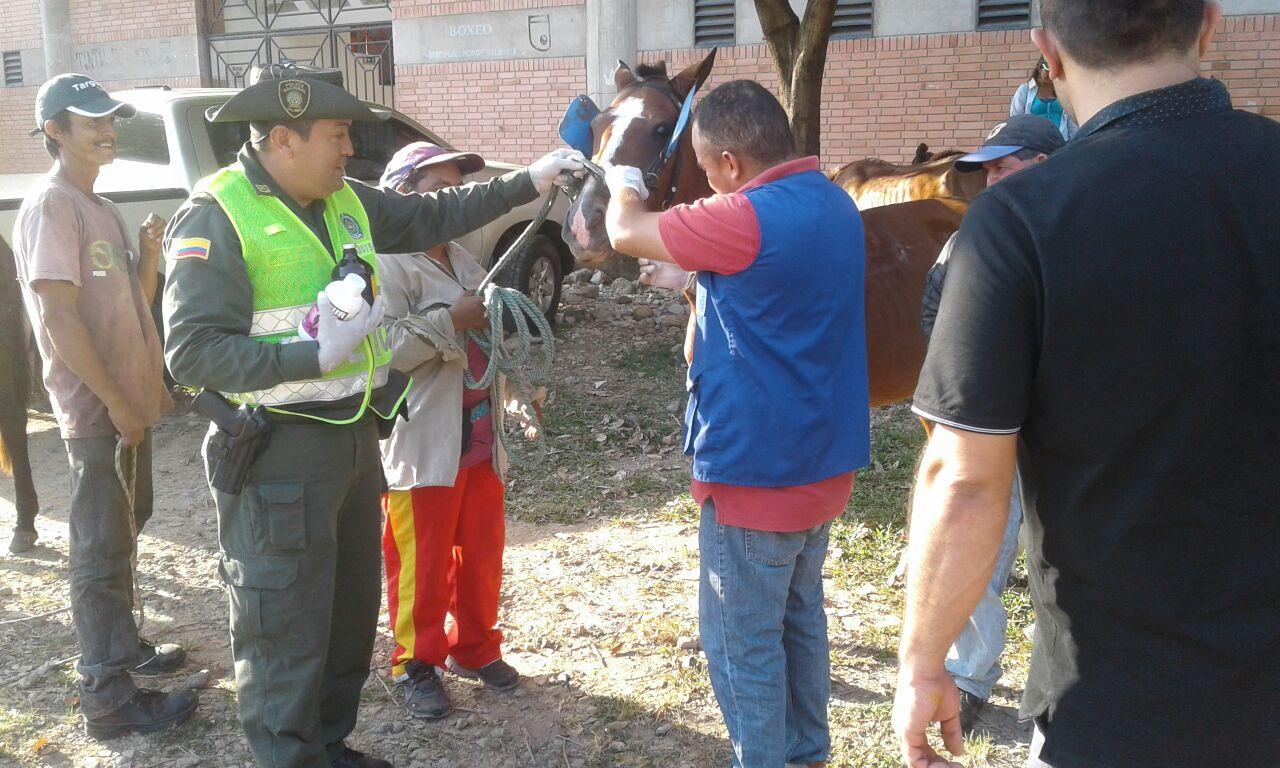 Policía Ambiental adelantó campaña preventiva de salud para equinos utilizados en vehículos de tracción animal