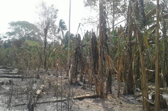 Incendio en la Barranca en Paz de Ariporo, despertó la atención de autoridades por la negativa de atención del Cuerpo de Bomberos del municipio.