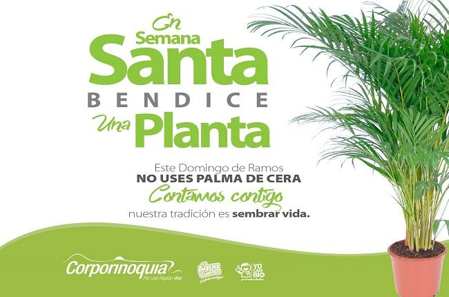 En Domingo de Ramos mejor usa palma areca y no palma de cera.