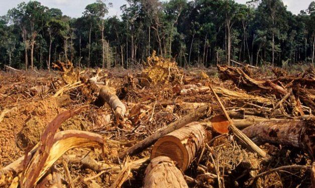 El área deforestada en Colombia incrementó un 23% en 2017.