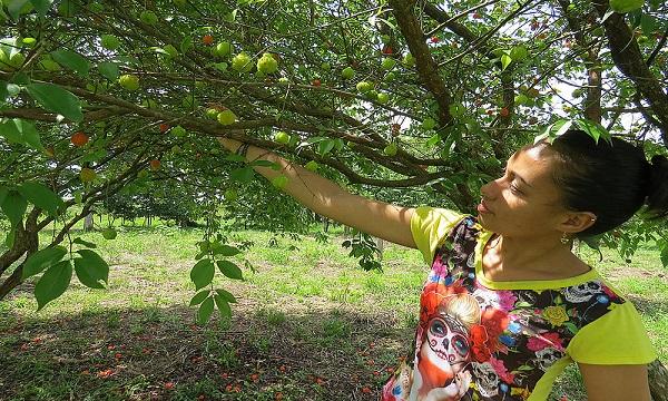 Frutos de la Orinoquia tienen potencial para emprendimientos.