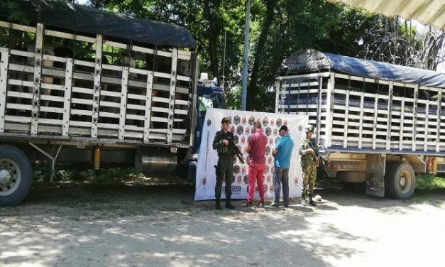 29 reses al parecer de origen venezolano fueron incautadas en Hato Corozal.