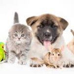 #EnAudio Consejos para quienes  se encuentran un peludito abandonado: las mascotas de Violeta