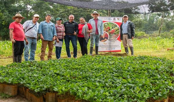 Avanza establecimiento de las 100 hectáreas de café en Casanare.